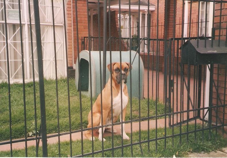 10 tips para dejar tu casa segura cuando sales de viaje - Casa de perro grande ...