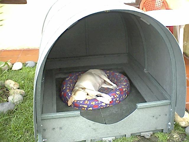 paridera para perros maderplast tipo igl para disear la paridera necesitamos tres medidas la longitud de
