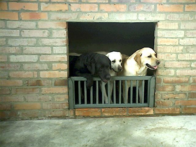 33 casas perros mascotas perreras pritorias corrales for Camas para perros de madera
