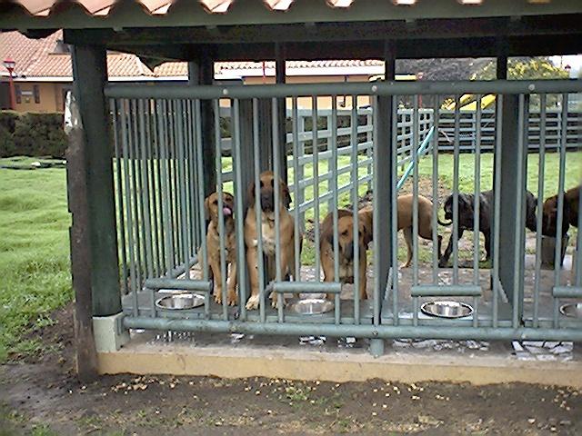 Perreras Maderplast En Pl Stico Fuertes Criadero De Perros