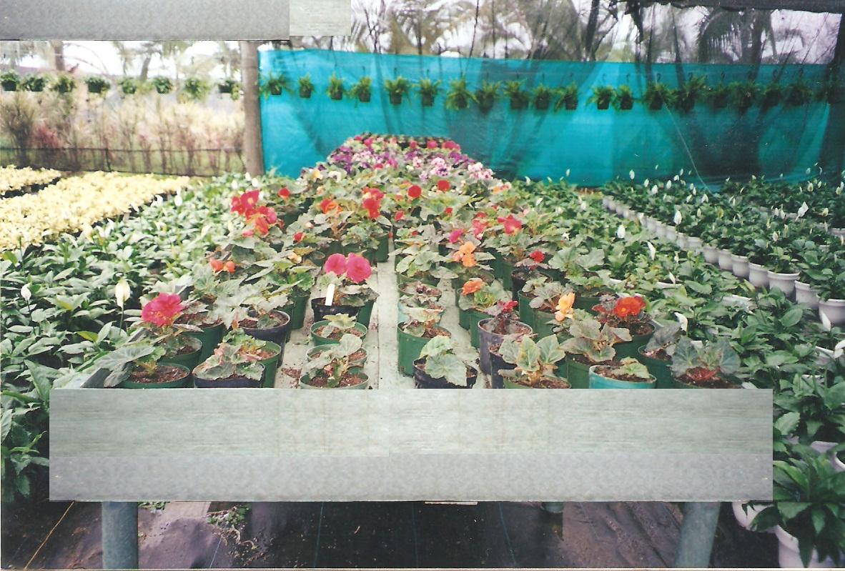 Cultivos tecnificados invernaderos agricultura cosecha for Matas de viveros