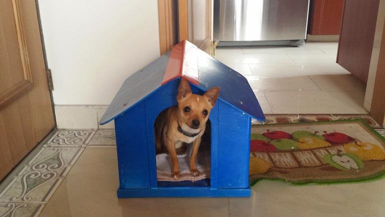 Casas perros mascotas perreras pritorias corrales establos especies menores 0 0 - Como hacer una casita para perros ...