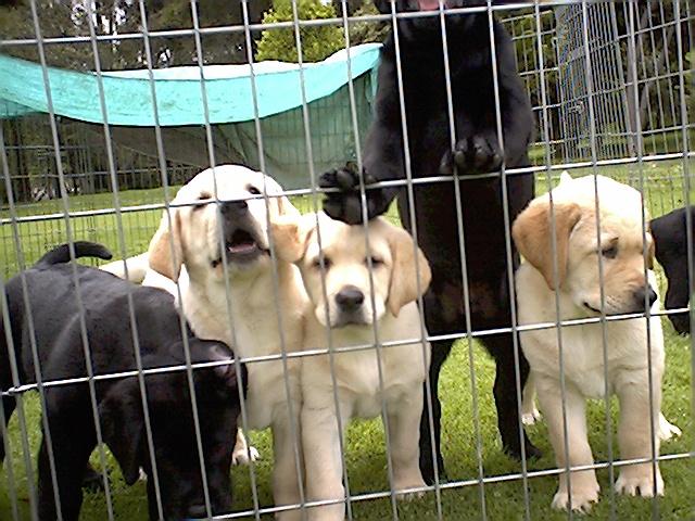 Casas perros mascotas perreras pritorias corrales establos for Puertas para mascotas
