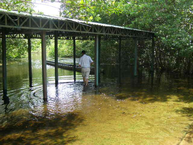 Pisc colas acuicultura tecnificada piscicultura pesca for Como hacer una granja de peces