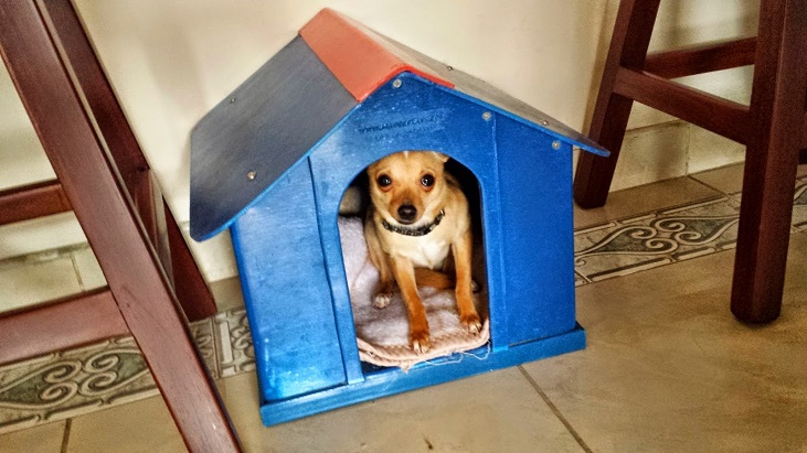 chiguagu 1 perreras maderplast en plástico fuertes criadero de perros las elementos para crianza de perros adiestramiento y cuidado de perros hotel para perros domesticar adiestrar amansar criar perros chiguagu 1 perreras maderplast en plástico fuertes criadero de perros las elementos para crianza de perros adiestramiento y cuidado de perros hotel para perros domesticar adiestrar amansar criar perros