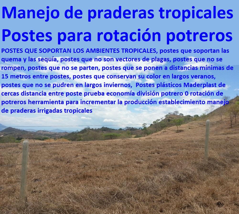 Postes plásticos Maderplast de cercas distancia entre poste prueba economía división potrero 0 rotación de potreros herramienta para incrementar la producción establecimiento manejo de praderas irrigadas tropicales